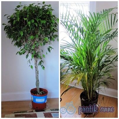 Evin havasını temizleyen bitkiler