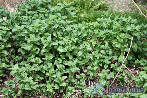 Sebze bahçemden gelişmeler