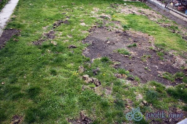Bahçemizin çimleri yabancı otlara yenik düşünce
