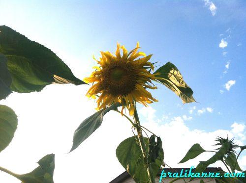 Sebze bahçesi 2012 – Hasat